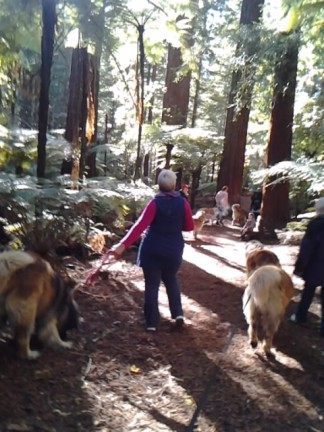 Redwoods 2012 2