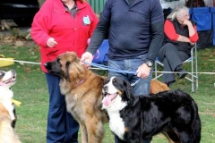 Bernese match